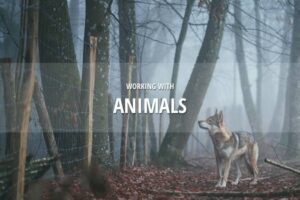 Working with animals in Dramatify